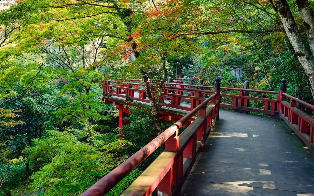 Japan market report helps prepare UK ELT providers for recovery